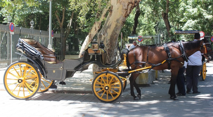 15. HORSE DRIVEN CARRIAGE